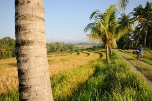 Bali tropical weather