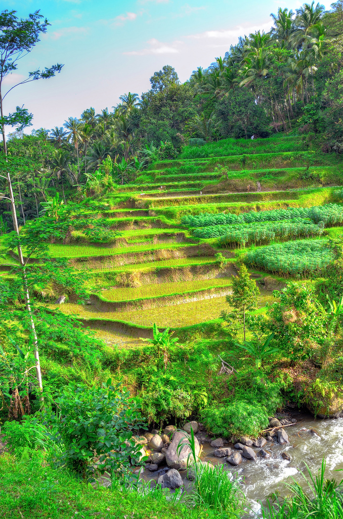 Bali rice terraces by Gedsman