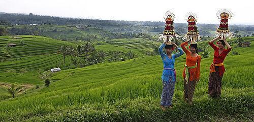 Jatiluwih rice paddies, Tabanan photo by Grand Chandra Hotel