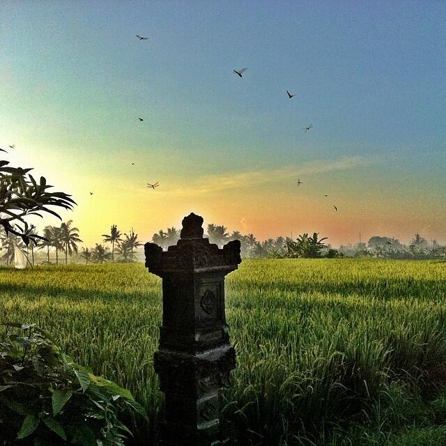 Nyepi in a Bali rice field photo by Incense Bali Massage
