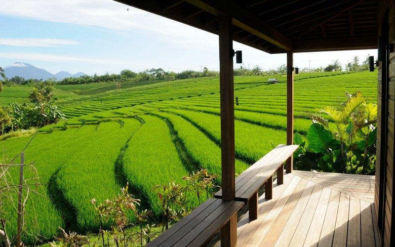 Bulung_Daya and rice fields