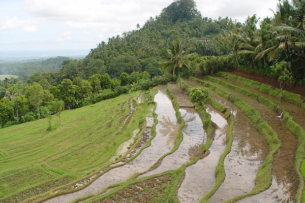 Bali rice terrace | © Carol Walker/Flickr