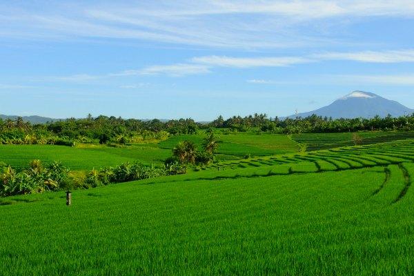 Belimbing_rice_fields_bali